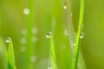 Beautiful water droplet hanging in leaf bud Wall mural