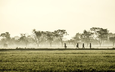 Silhouette of several people walking in the middle of vast rice field, they are farmers who started to work. This picture was taken at sunrise