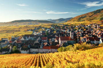 Spectacular autumn mountain landscape with vineyards near the historic village of Riquewihr, Alsace, France. Colorful travel and wine-making background.