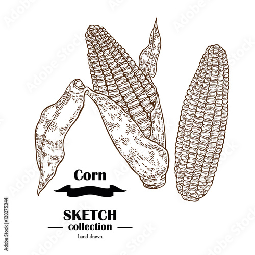Corn Sketch Related Keywords - Corn Sketch Long Tail ...