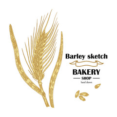 Ears of barley. Hand drawn cereal set. Bakery logo design. Vector