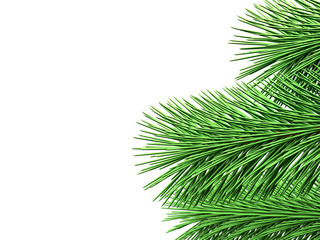 Fir branches with green needles on white background (3d illustra