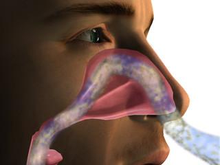 Nasal Passage Breathing Air Flow