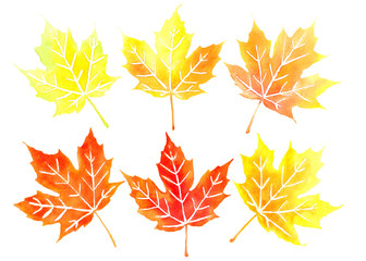 Six orange canadian maple leaves