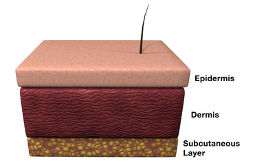 Skin Layers Labeled