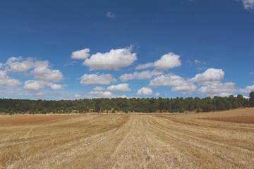 Tarımsal Kuraklık - Orman ve Gökyüzü