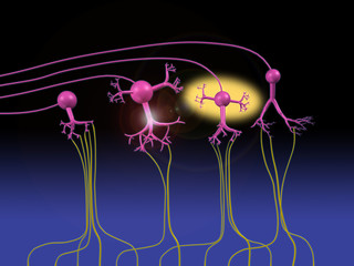 Olfactory Neurons Respond to Fragrance