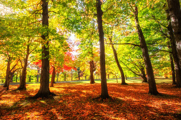 Beautiful colorful Autumn leaves in Rochester City of New York.,