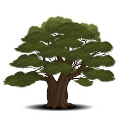 cedar tree with green needles