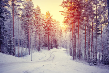 Sunrise in snowy forest