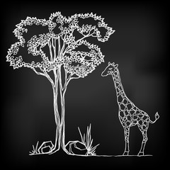 Chalk vector tree and giraffe.