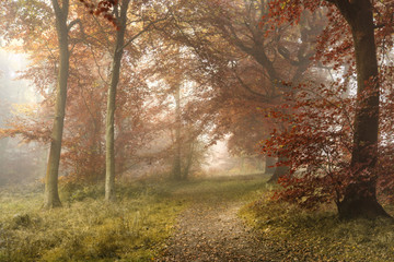 Stunning colorful vibrant evocative Autumn Fall foggy forest lan