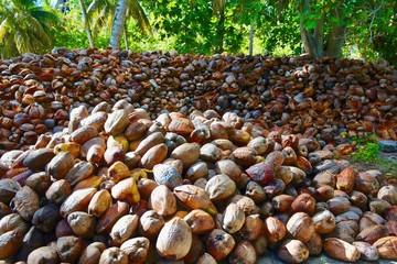 Kokosnussplantage auf La Digue, Seychellen