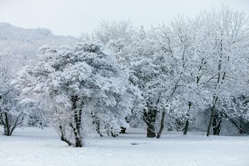 Snowy winter park.