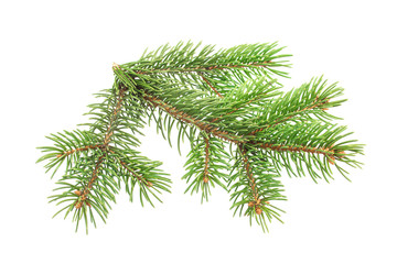 Fir tree branch isolated on white background