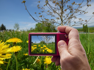 Meadow with dandelions in camera viewfinder
