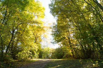 Laubbäume im Herbst