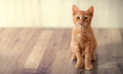 Red little kitten