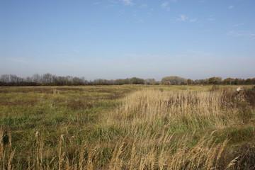 Landscape field
