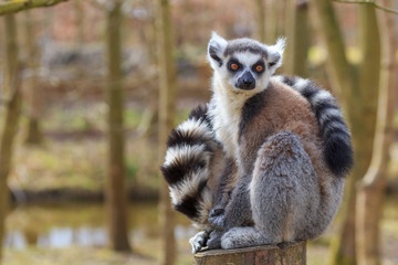 A lemur sits at the tree trunk