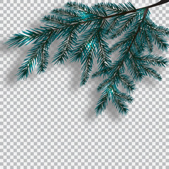Two blue realistic branch of tree on background checker. Fir branches located in the corner with a shadow. Christmas illustration