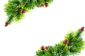 frame of spruce branches on a white background
