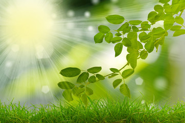 Green leaves in morning,natural background..
