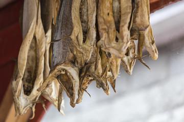 Stockfish hanging to dry