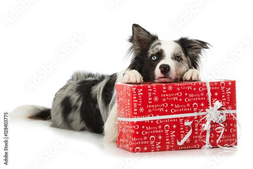 hund mit weihnachtsgeschenk fotolia. Black Bedroom Furniture Sets. Home Design Ideas