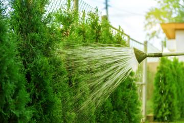 Watering lawn in garden