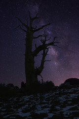 Light Painted Landscape of  Stars in Bristlecone Pines