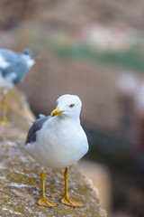 Seagull standing on the rocks against the sea