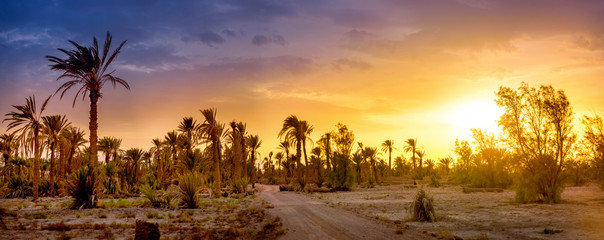 road in a palm grove at sunset