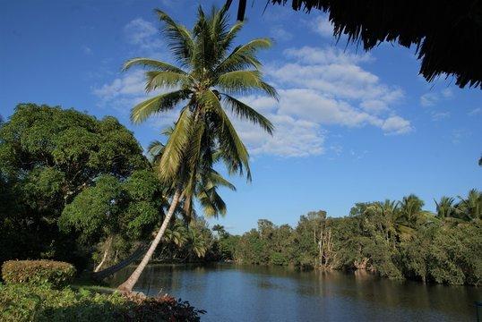 PAlma w parku narodowym Zapata.