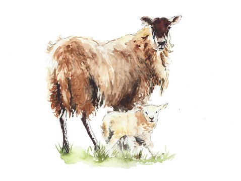 Sheep with lamb mother and child animals watercolor painting illustration isolated on white background