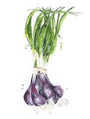 Green onions scallions vegetables watercolor painting illustration isolated on white background