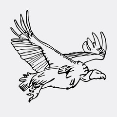 Hand-drawn pencil graphics, african vulture, hawk. Engraving, stencil style.