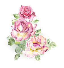 Rosebush. Pattern from pink rose. Wedding drawings. Watercolor painting. Greeting cards. Rose background, watercolor composition. Flower backdrop.