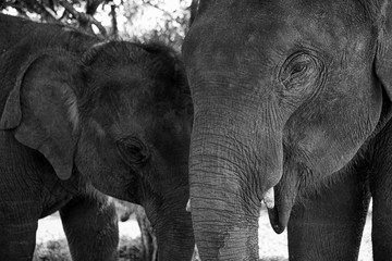 Photo Blinds Elephant Baby asia elephant in Maesa, Chiangmai Thailand