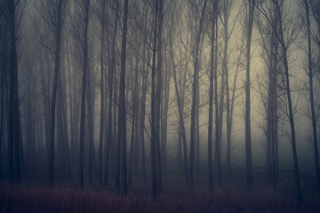 Papiers peints Forets Mystic forest a foggy day