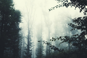 tree branches in forest with fog