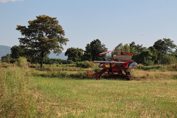 Combine harvester in rice field. This is a new technology for rice planting.
