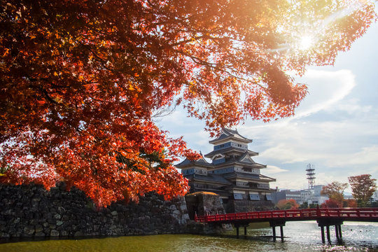 Matsumoto Castle in Autumn with Red Maple Leaf on Sunny Day, Crow Castle, Matsumoto, Nagano prefecture, Japan