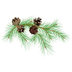 Pine branch with cones. Modern flat decor element for invitations, print, poster, card, banner. Isolated on white background.