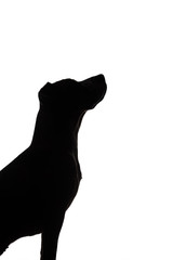 Dog silhouette on white background. Dark contour of a puppy sitting and looking up