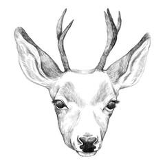 Portrait of Deer. Hand drawn illustration.