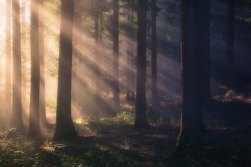 Fototapeten Wald sun rays on forest