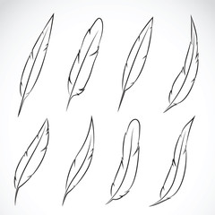 Vector group of feather on white background.