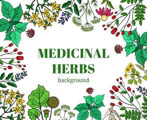 Wall Mural - Wild medicinal herbs background