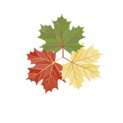 maple leaf set isolated on white background.